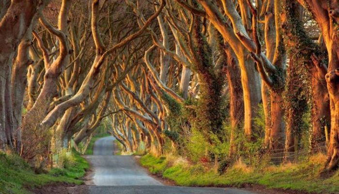The Dark Hedges, un túnel vegetal con fantasma incluido